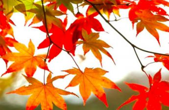 a picture of fall leaves which can clog gutters